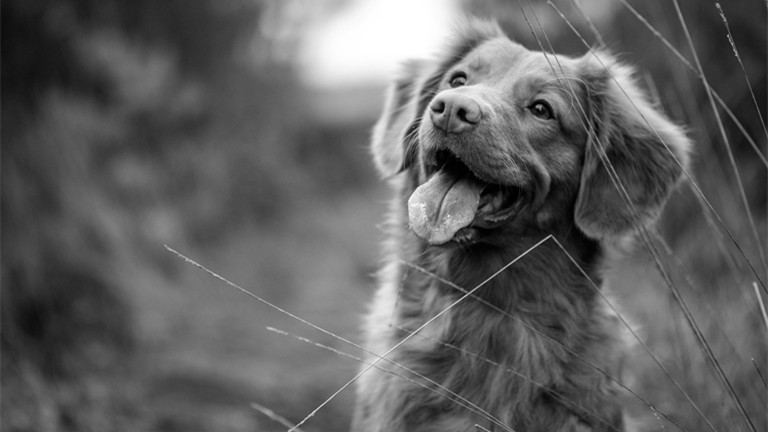 Grief Poems For Pets Who Were More Than Family