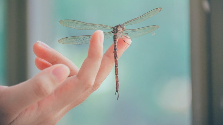 a Dragonfly Landing on You