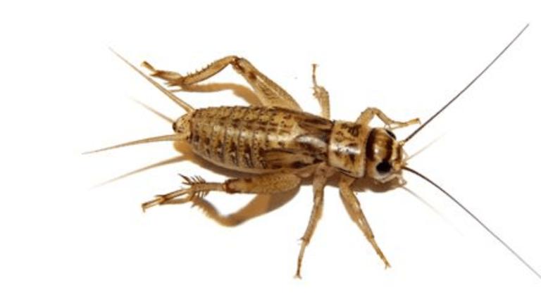 make sure crickets don't come back